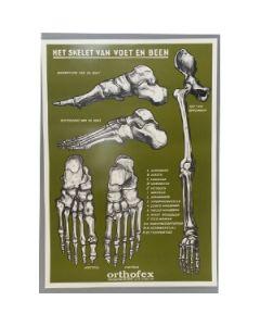 Poster Het skelet van voet en been 60x42cm