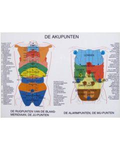 Poster Akupunten 60x42cm