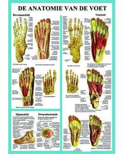 Poster De Anatomie van de Voet A2