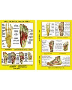 Poster de anatomie van de voet A4