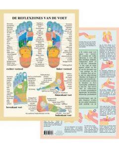 Poster De Reflexzones van de voet A4